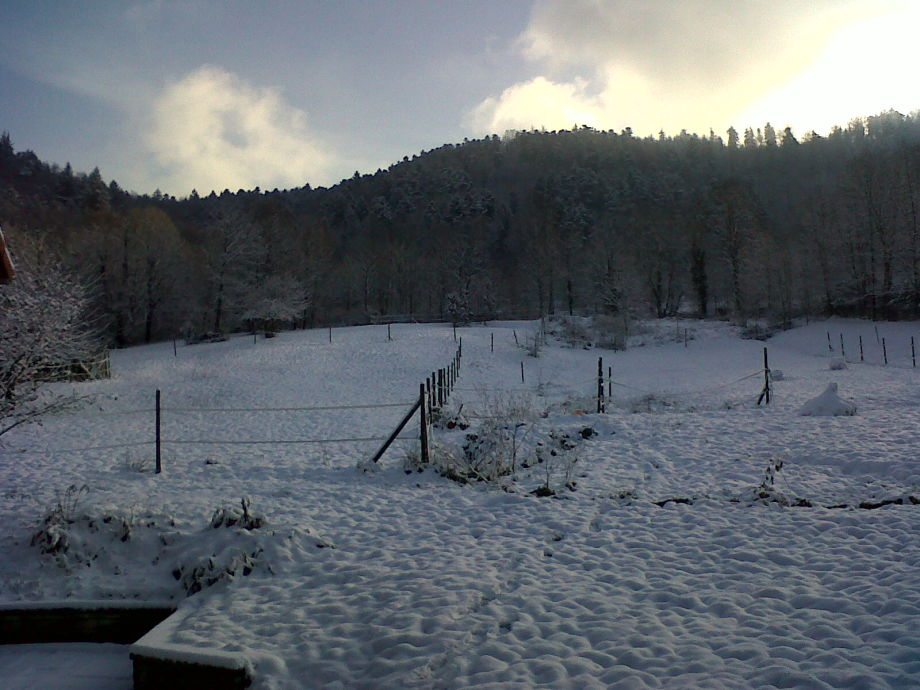 View from house on meadow