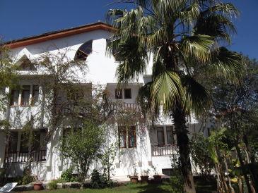 Villa Palmetto