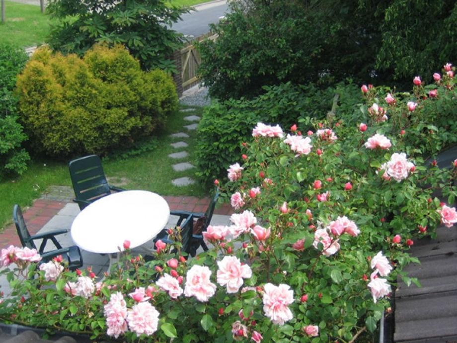 Blick auf die Terrasse im Garten