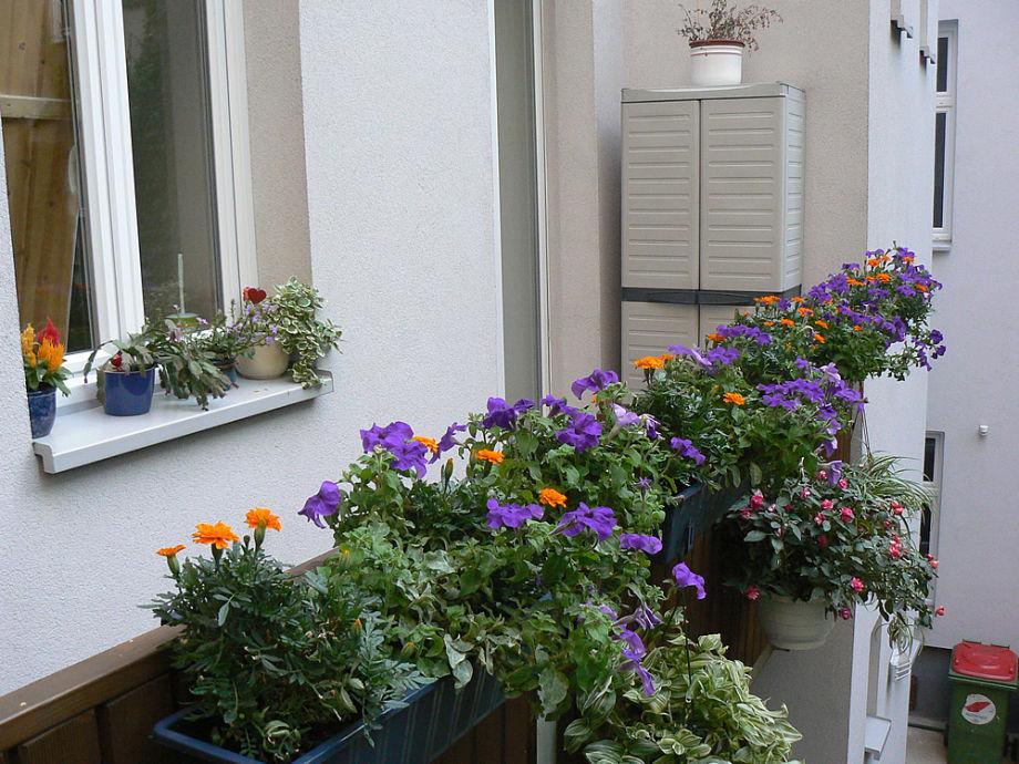 Apartment pension vitis vienna mr karl gerstl for Plants for apartment balcony