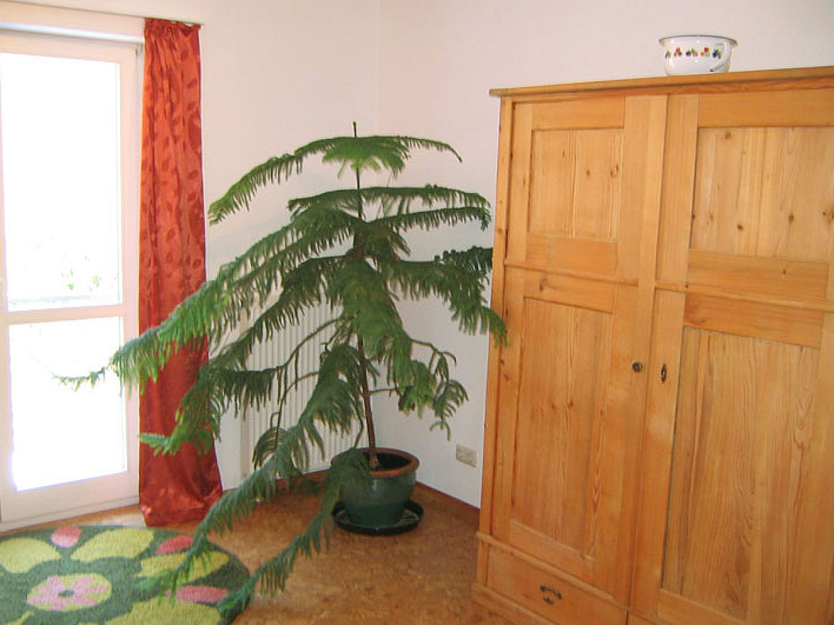 Ferienwohnung moselblick uttend rfer hoch ber der for Pflanzen zimmer