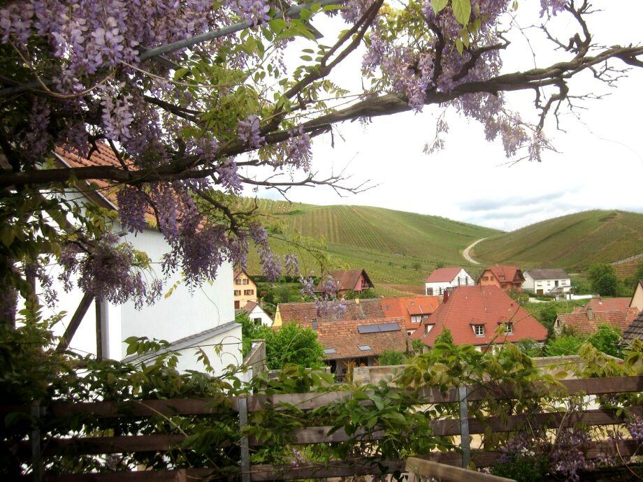 Von der Terrasse Blick auf den Weinberg