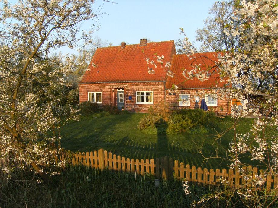 Kirschblüte im Frühjahr - Wintersonne am Jahreswechsel