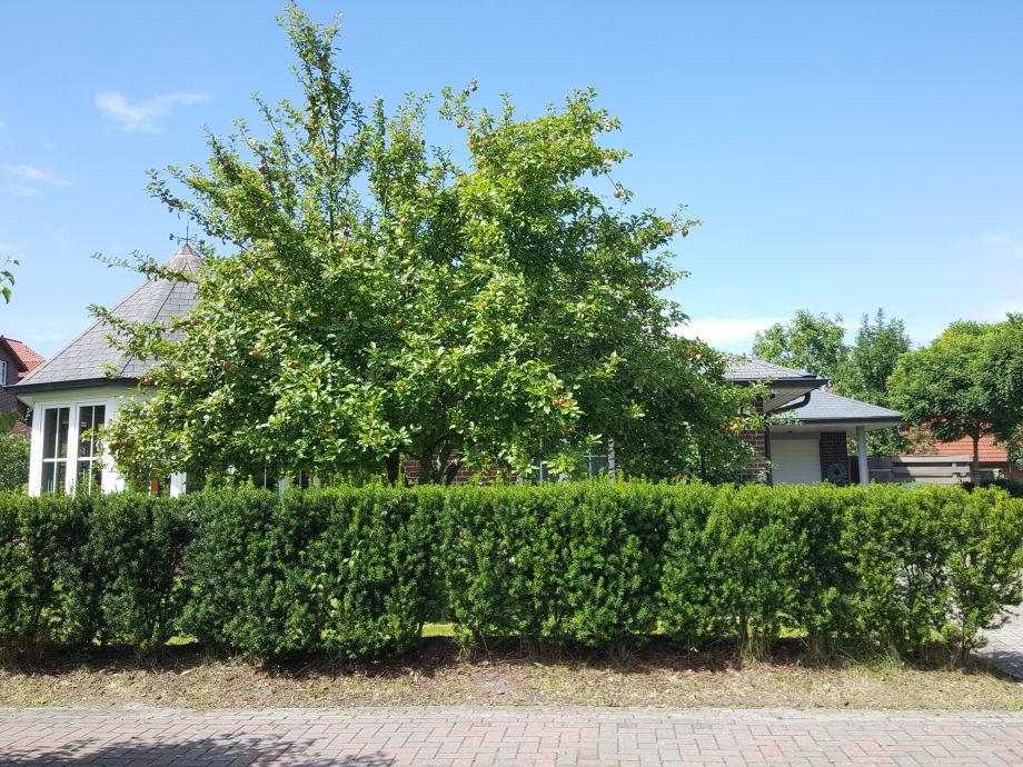 Vorderseite mit riesigem Apfelbaum