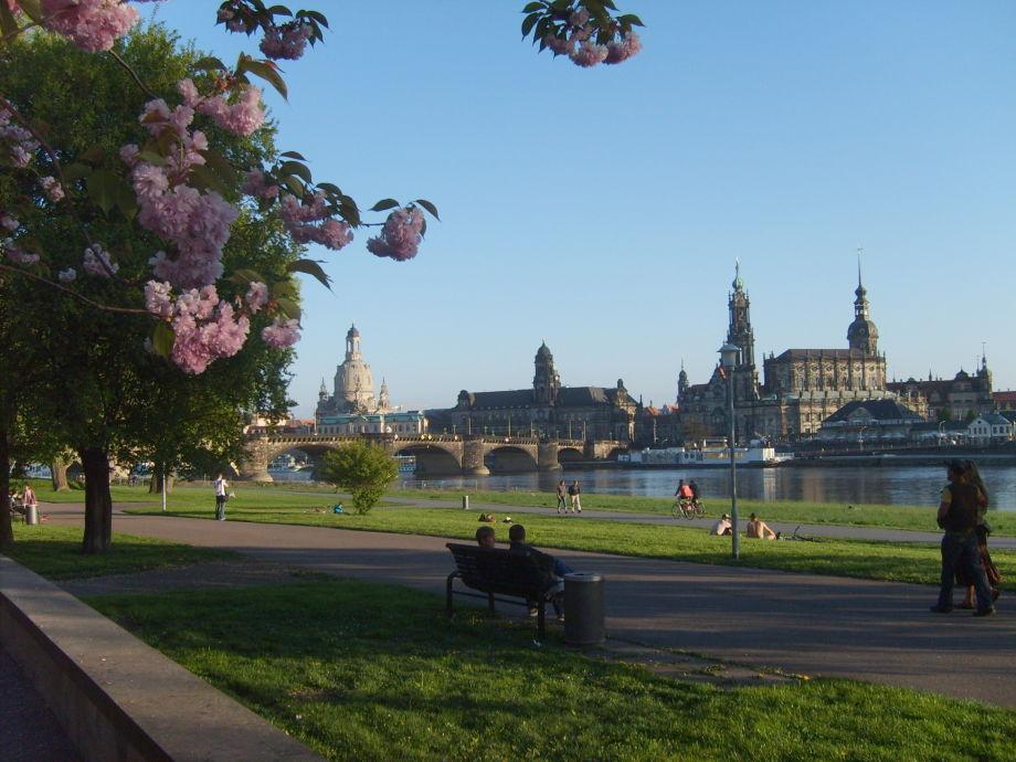 Ferienwohnung Gaartz mit Elbblick, Dresden Stadt - Herr ...