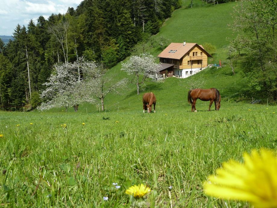 """Ferienhaus Sinnpathie """"im Herzen der Natur"""""""