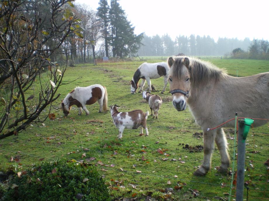 Unsere Tiere freuen sich auf die kleinen und großen Gä