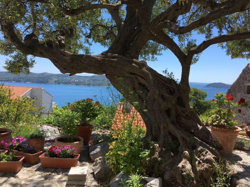 Holiday apartment Dubrovnik - House Stijepo - Orasac