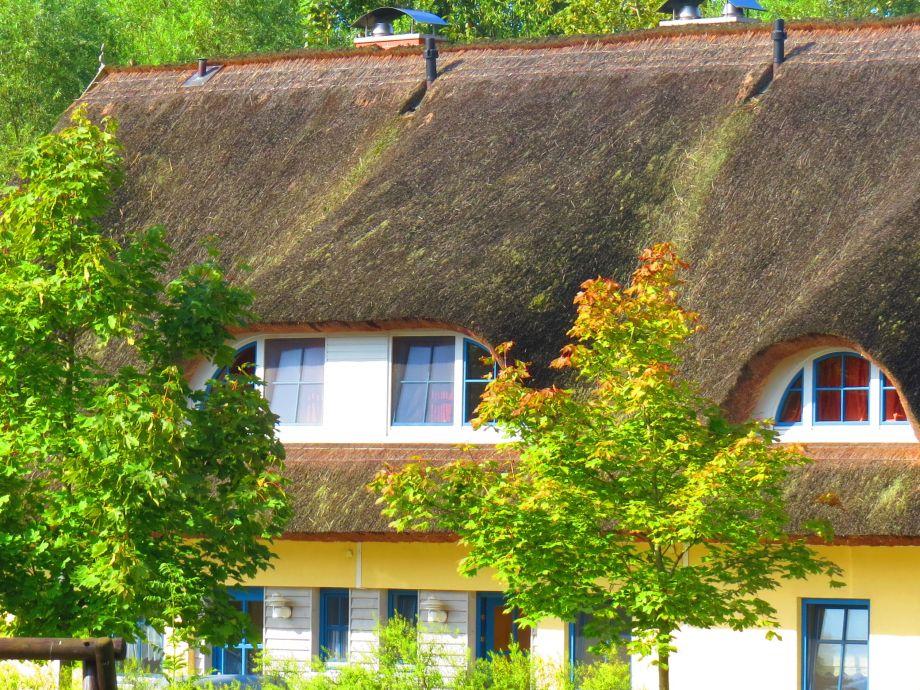 Reetdachhaus Holunder 1