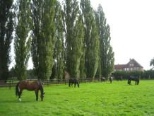 Ferienwohnung Pferdehof Homann