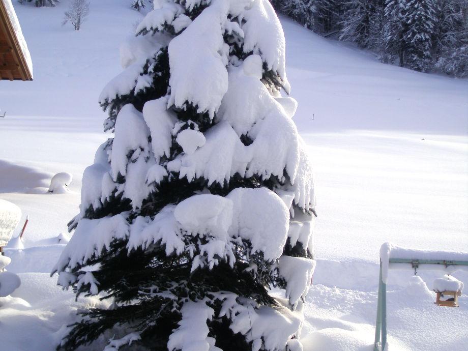 """Unsere """"Haustanne"""" im Winterkleid."""