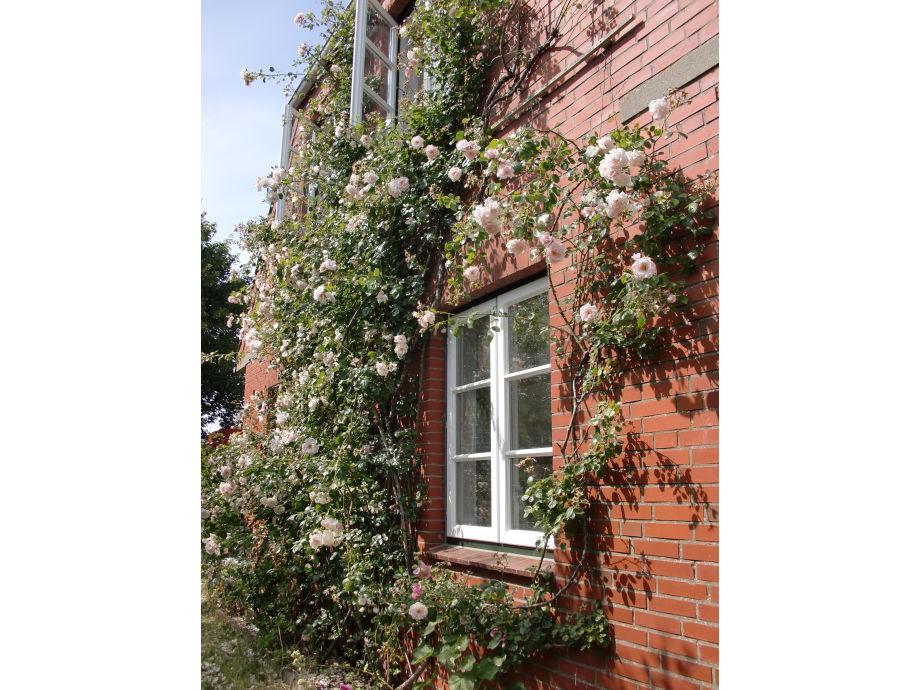 Das Rosenhus