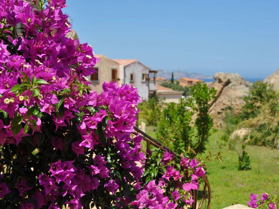 Der Garten und seine Blumen