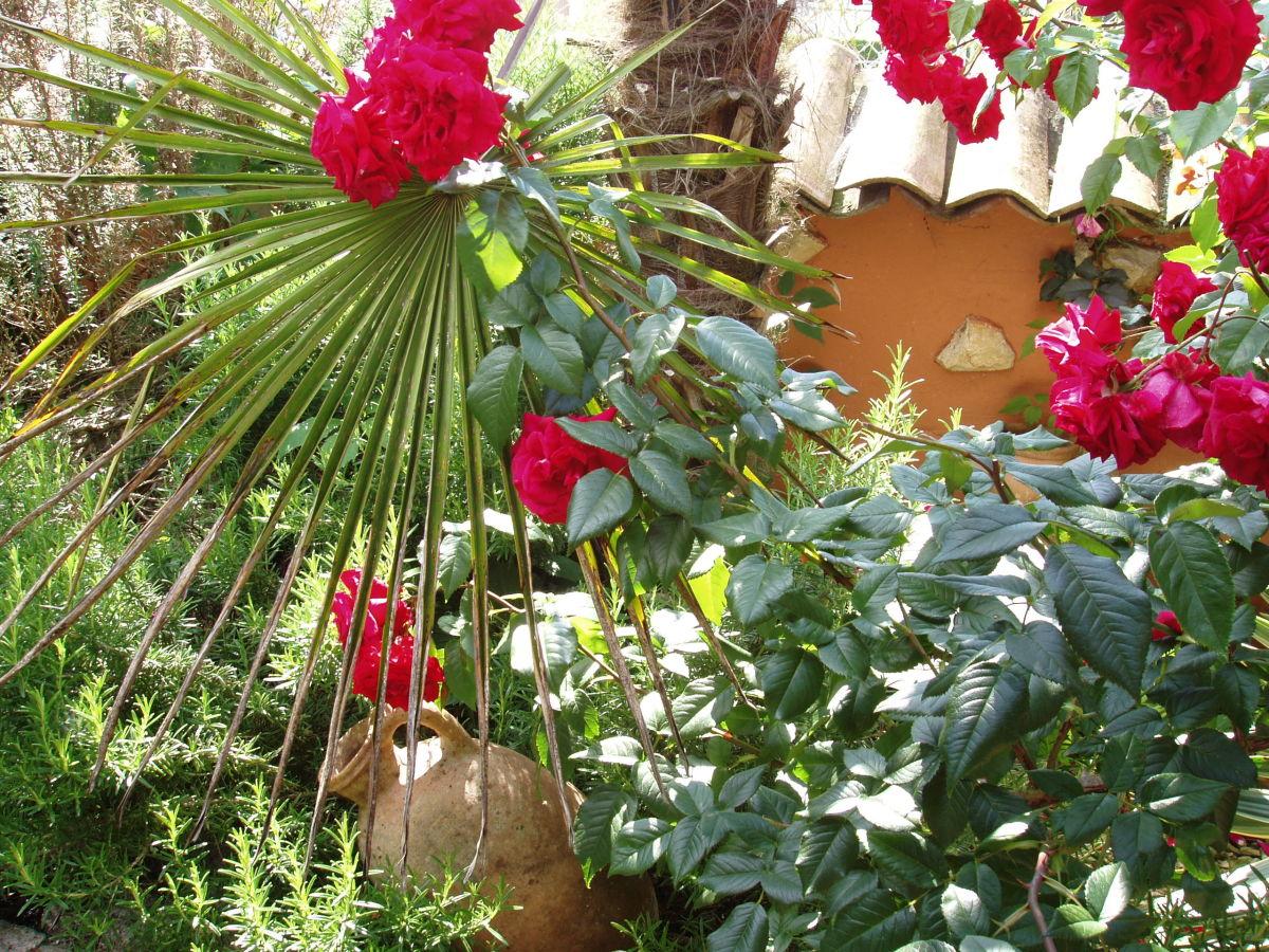 Ferienhaus rosengarten ferienwohnung bella italia for Mediterraner garten