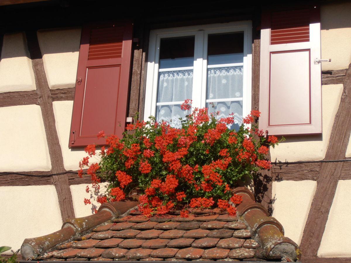 Ferienwohnung das els ssische fachwerkhaus elsass haut - Fenster mit aussicht ...
