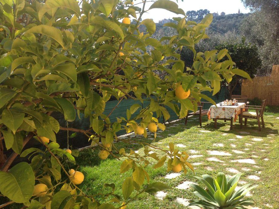 Garten mit Gartenmöbeln