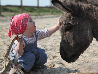1 auf Selmas Ponyhof