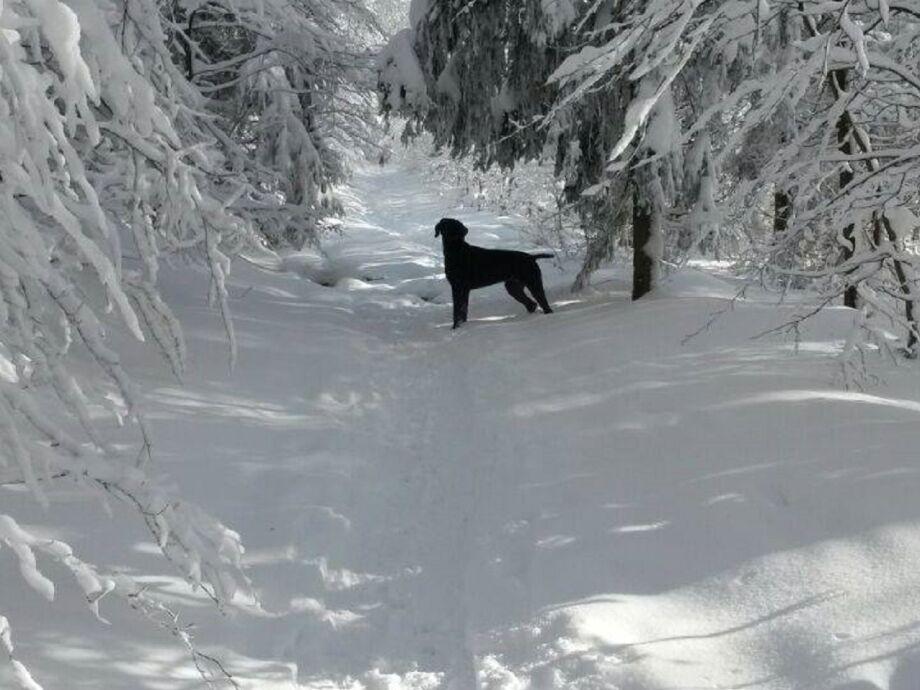 Hundewandern im Schnee