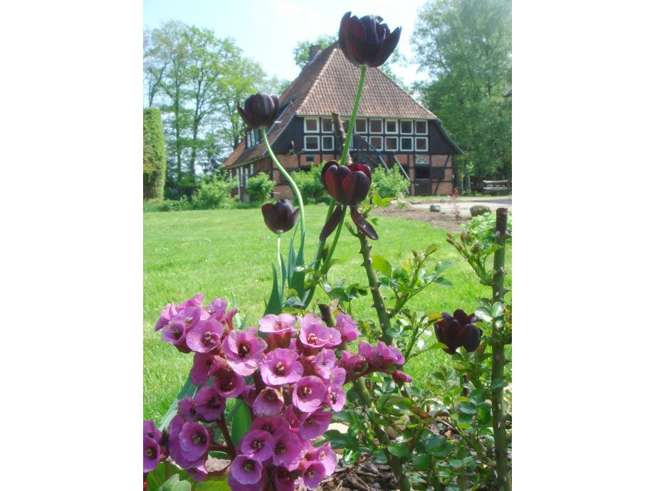 Gästehaus mit Frühlingsblumen