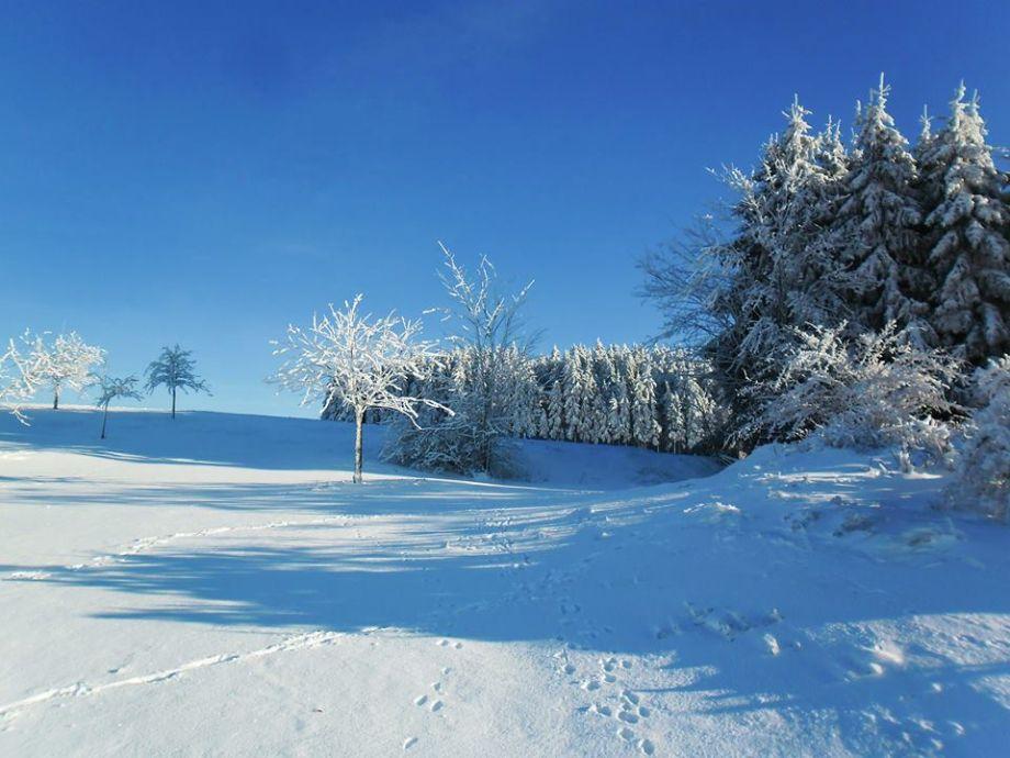 Winterloipen im verschneiten Frankenwald