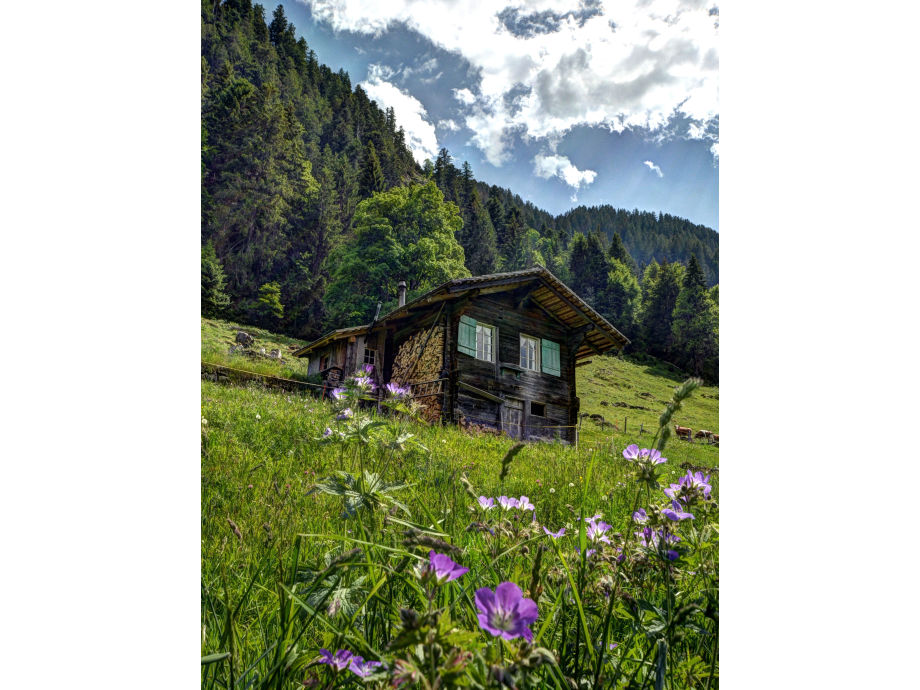 Cherry Tree Hut Alp Schneit Switzerland