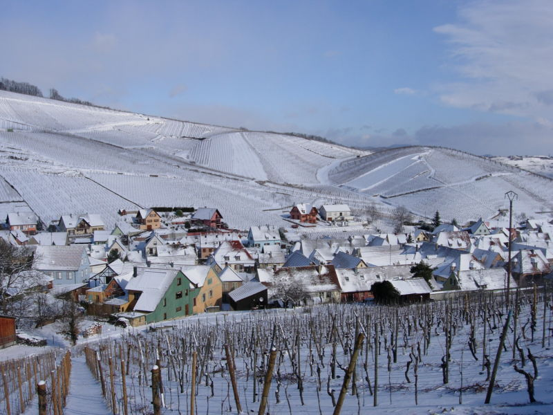 Holiday apartment Stay at an organic wine estatein Alsace
