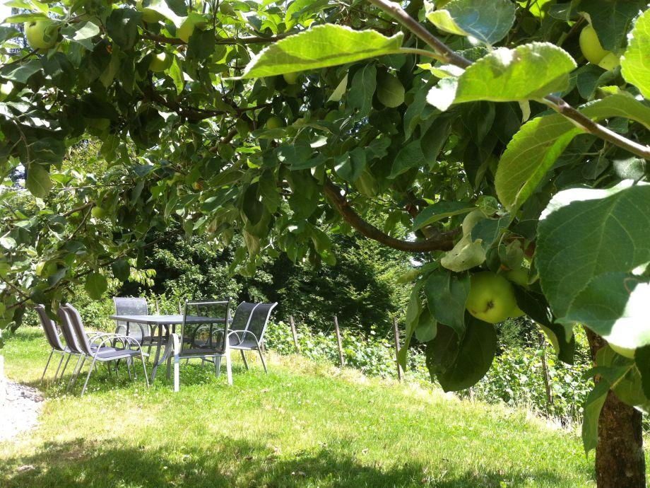 Träumen unter dem Apfelbaum