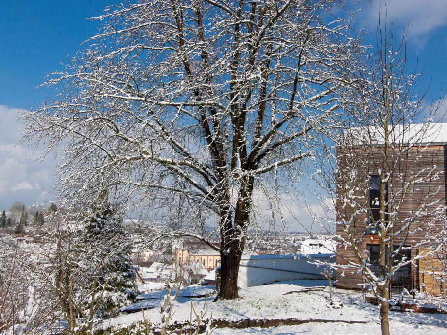 Blick nach Lahr im Schnee bis zum Schutterlindenberg