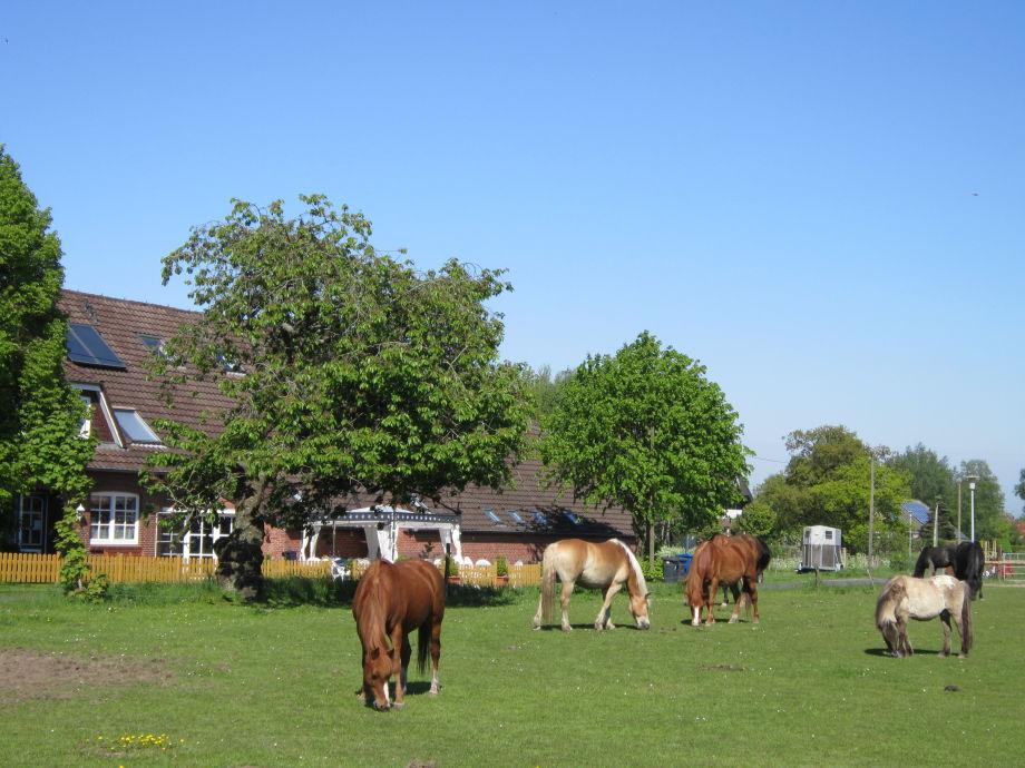 Ponyweide direkt am Hof