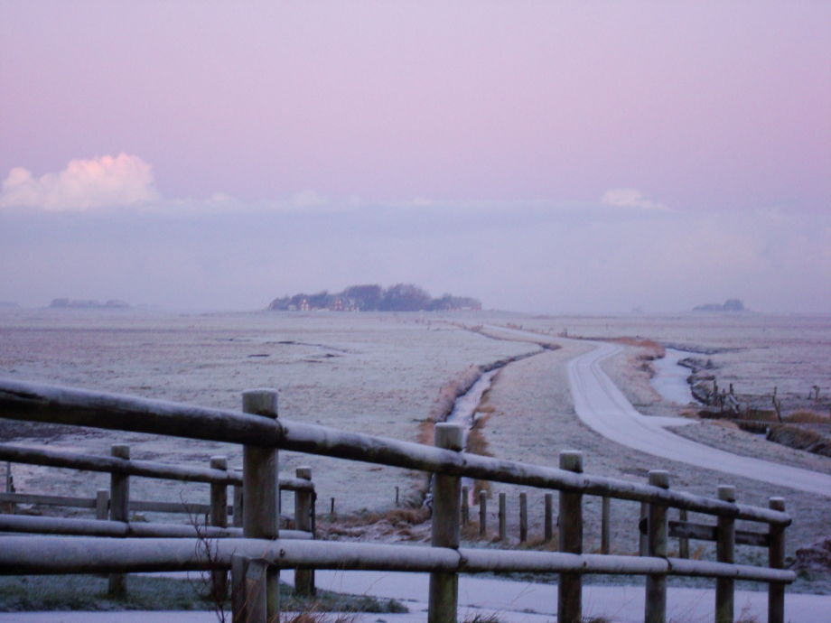 Winter on the holm