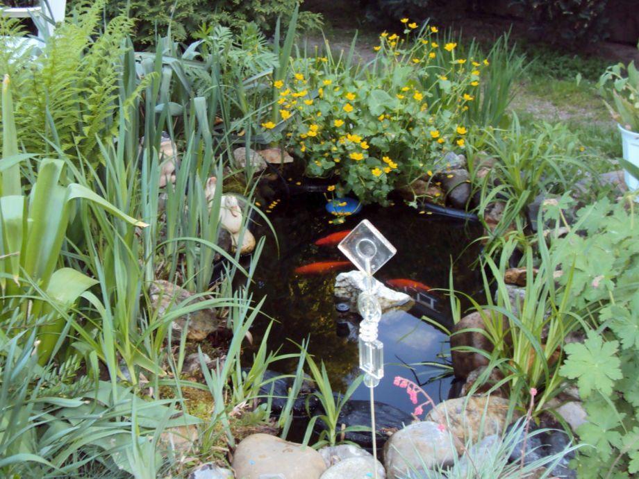 Unser kleiner Teich