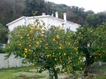 Ferienwohnung Villa Giulia