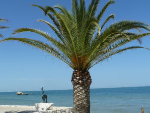 Ferienwohnung An der Palmenriviera