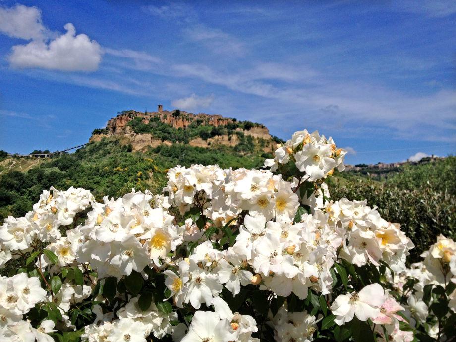 Ausblick mit weissen Rosen