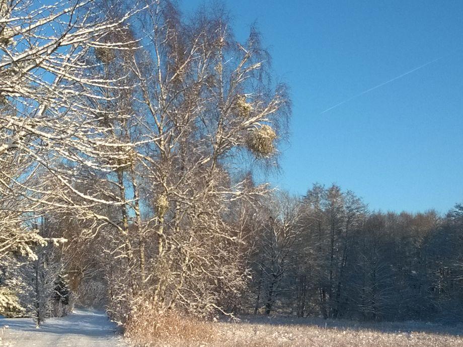 unsere Winterlandschaft