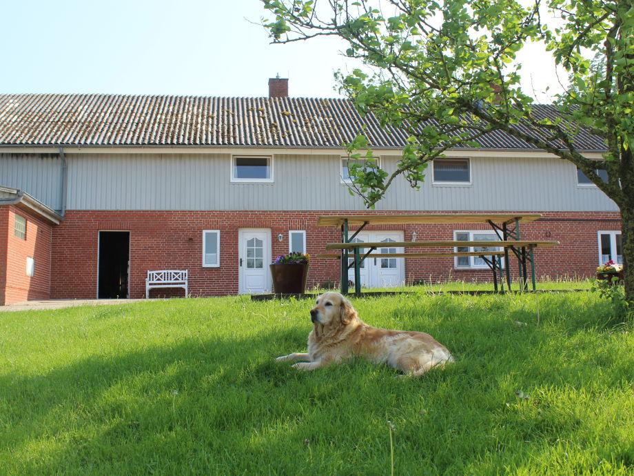 Unser Hofhund Emma unter dem Birnenbaum.