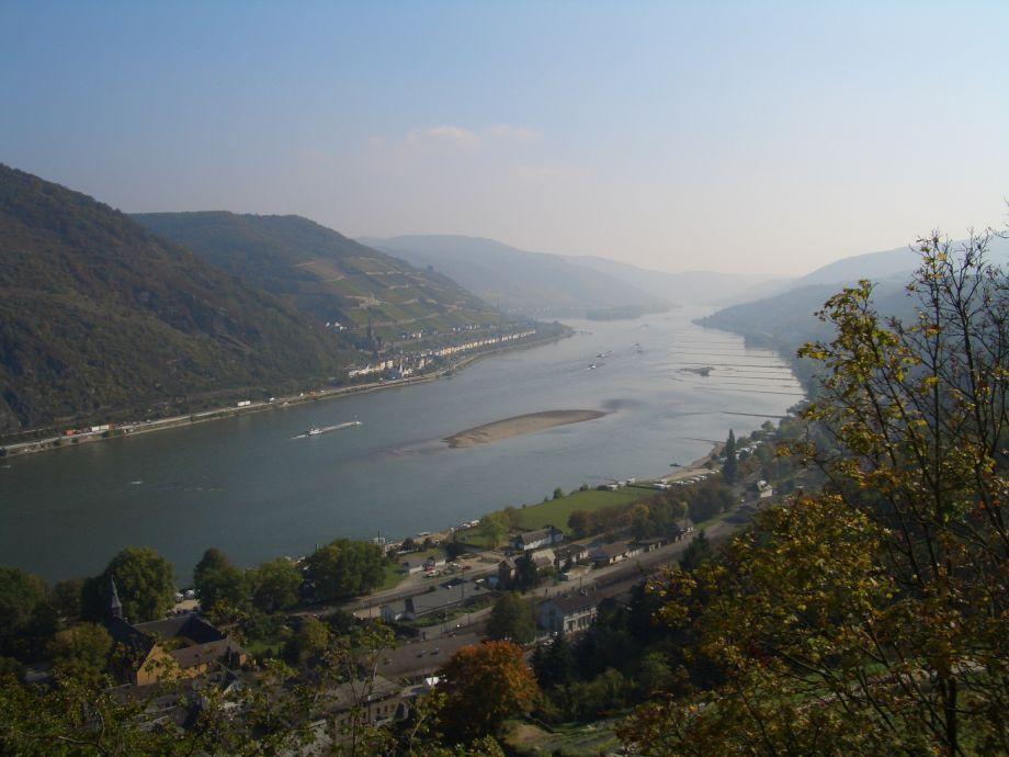 Blick vom Weinberg ins Rheintal