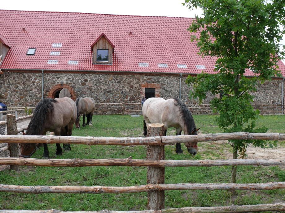 Ein paar unserer Pferde