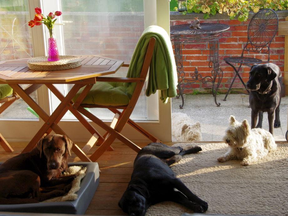 Der Wintergarten mit eigenem Rudel und Gasthunden