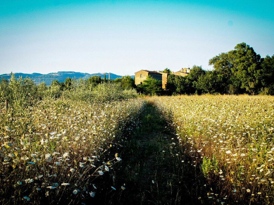 Das Landhaus von unserem Feld gesehen