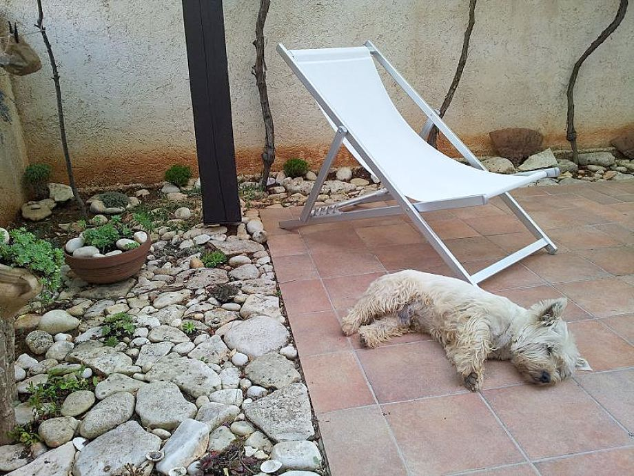 Charlie im Garten