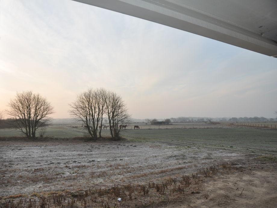 Blick vom Balkon, Februar 2015
