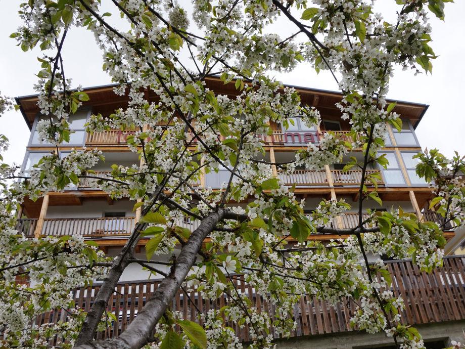 Ferienwohnen Mattle, Frühjahr, Blüte, Paznaun-Ischgl