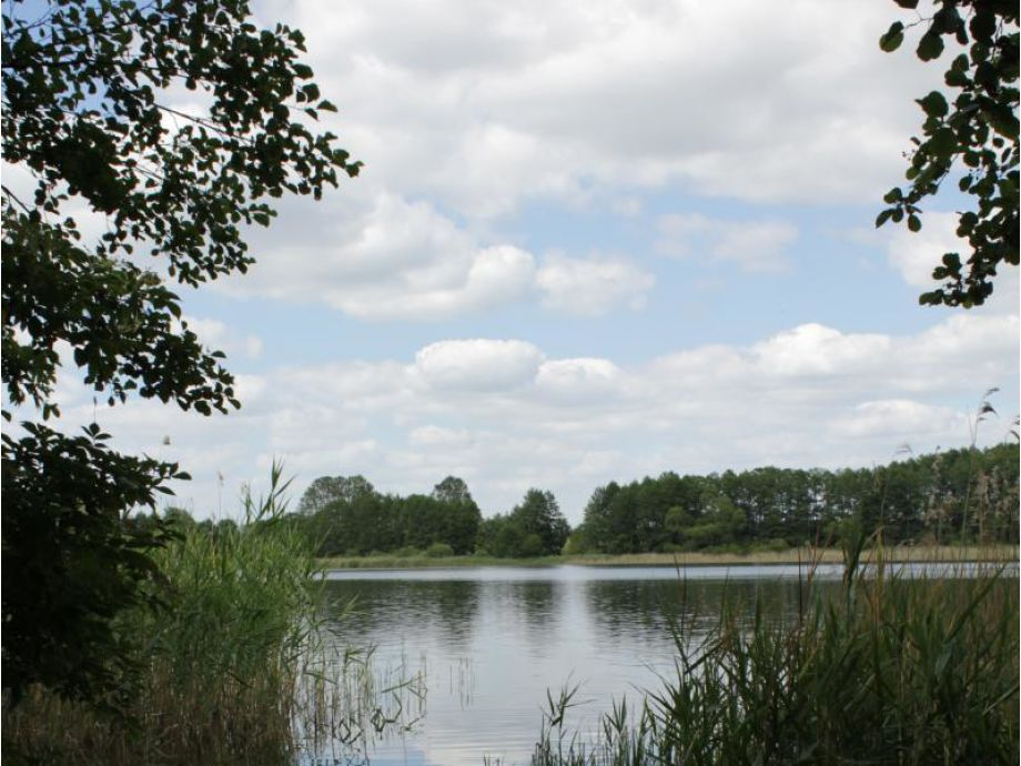 Am Loppiner See