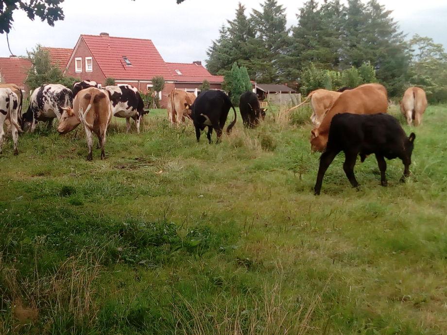 unsere Herde am Haus