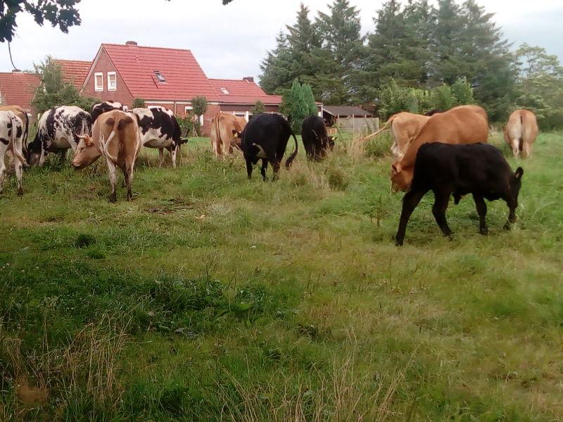Bauernhof Münkenland