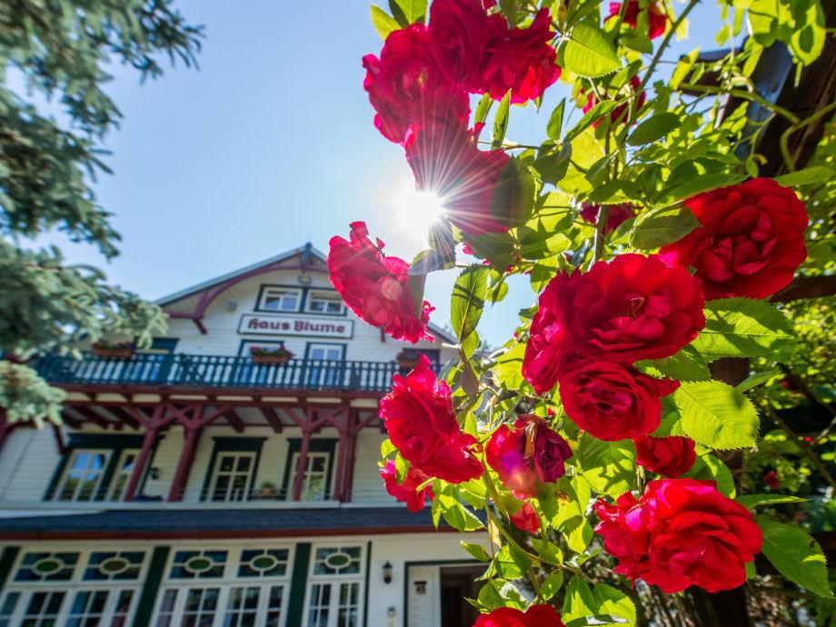 Ferienwohnung Haus Blume Appartement 002 Wernigerode