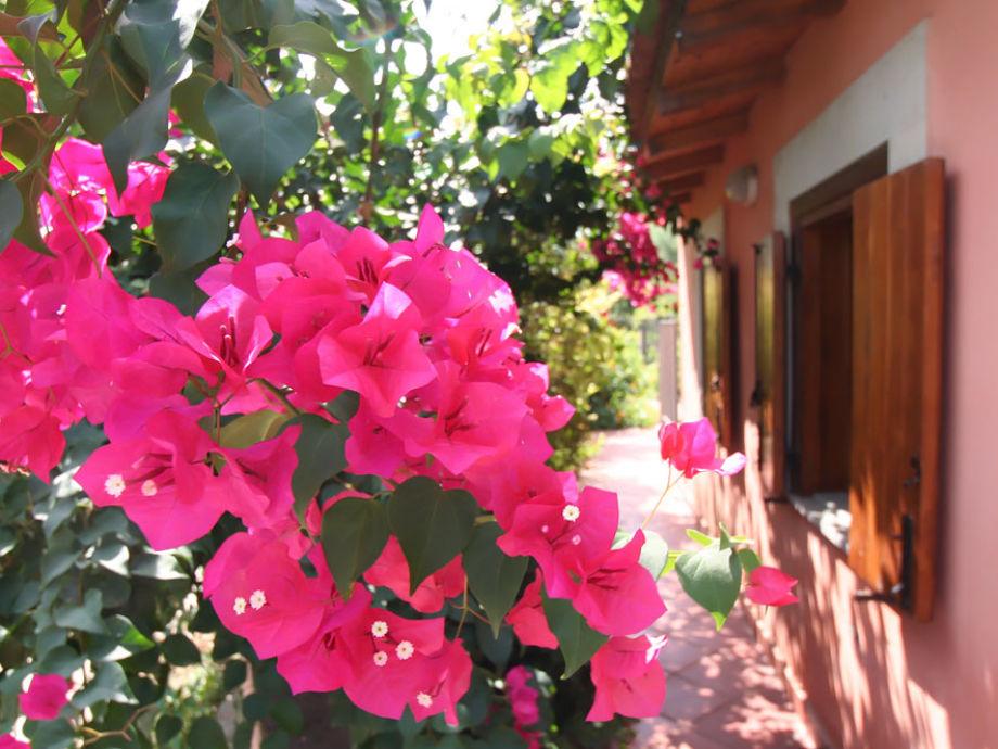 Das Haus ist umgeben von einem Meer aus Blumen