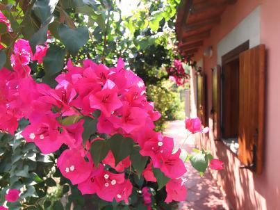 Casa Rosa I