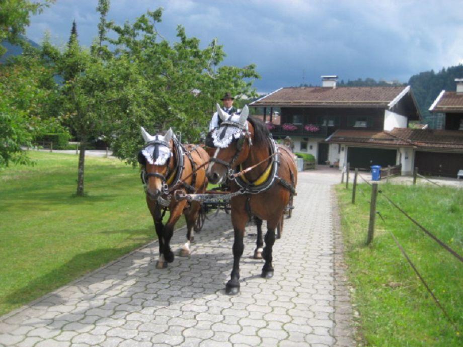 Pferdekutsche ab Hof